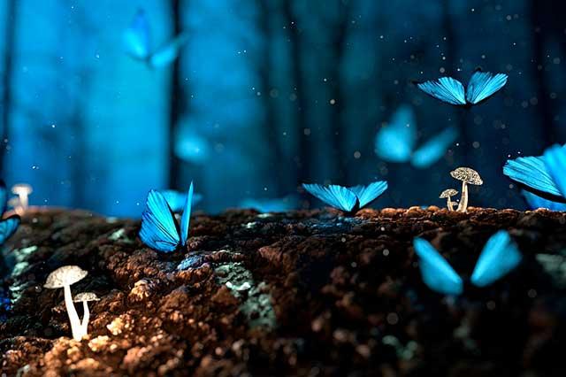 borboletas azuis representando a mudança
