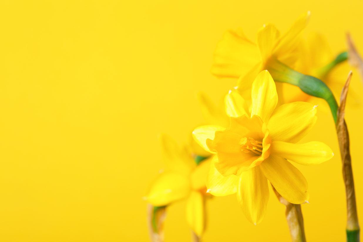 Setembro Amarelo: É Tempo de Olhar Para a Vida